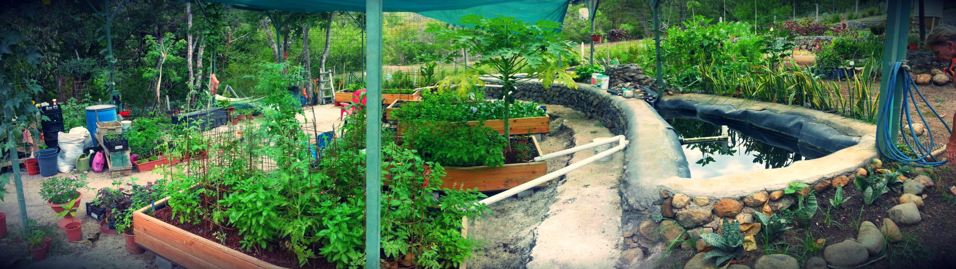 Our Aquaponics System In Costa Rica