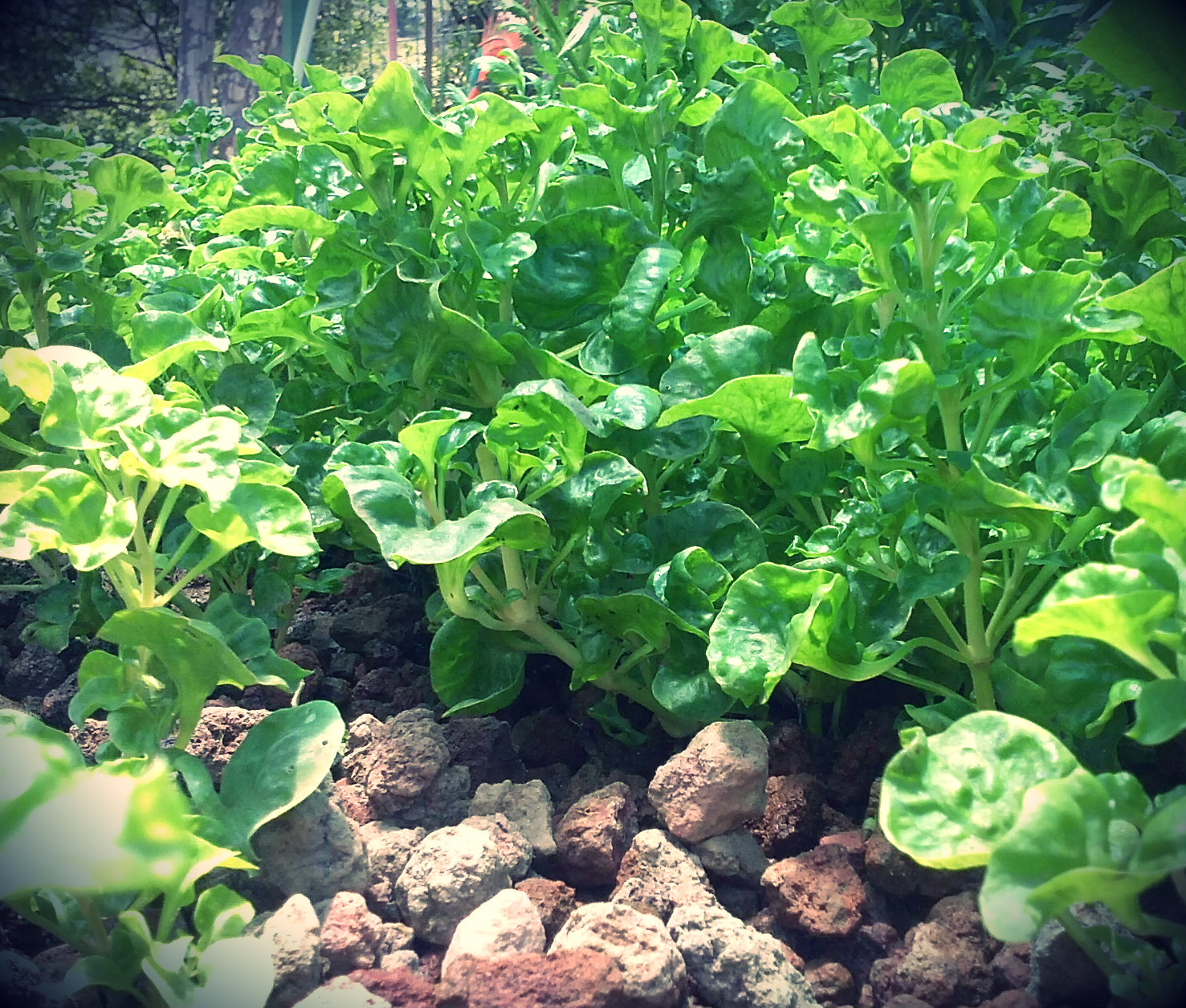 Why You Need to Know About Perennial Gardening