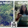 How to Make Moringa Powder