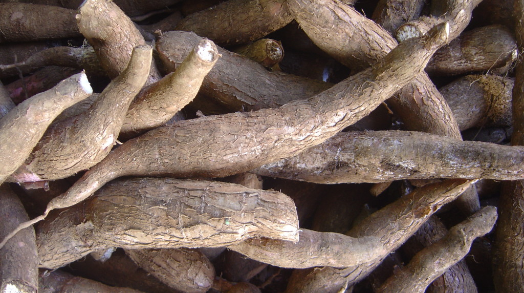 Cassava - or yuca