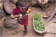 Pitcure in children in africa eating moringa after a harvest, superfood moringa