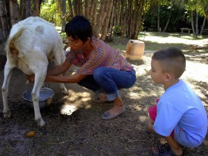 boy and goat getting milked