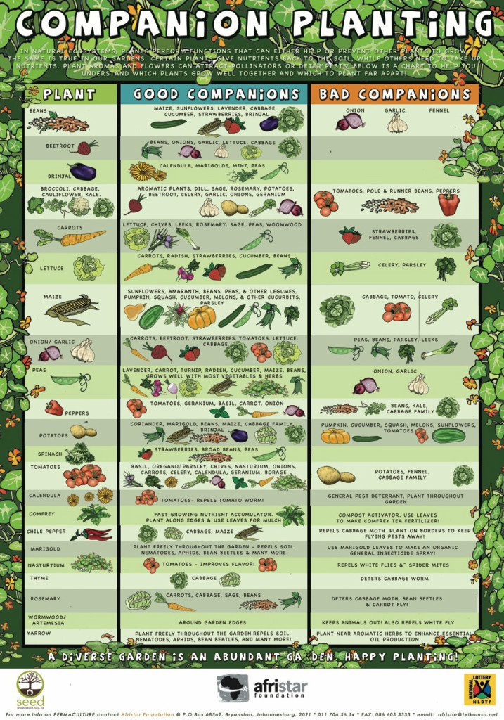 Guide For Companion Planting