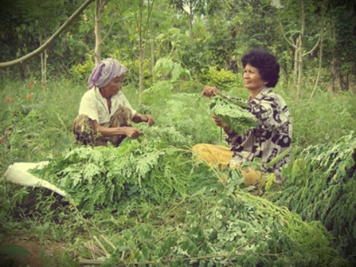 Moringa Project in Cambodia