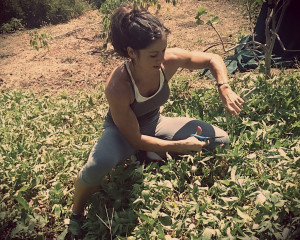 Fit woman cutting camote tops for salad greens
