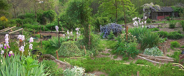 Getting Started With A Permaculture Garden