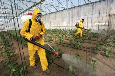 Pesticide Residue – Organic Vs Conventional Produce