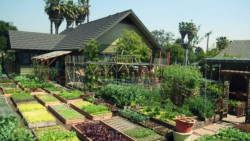 Devaes Urban Homesteading