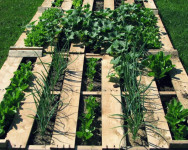 Pallet garden design with plants and soil