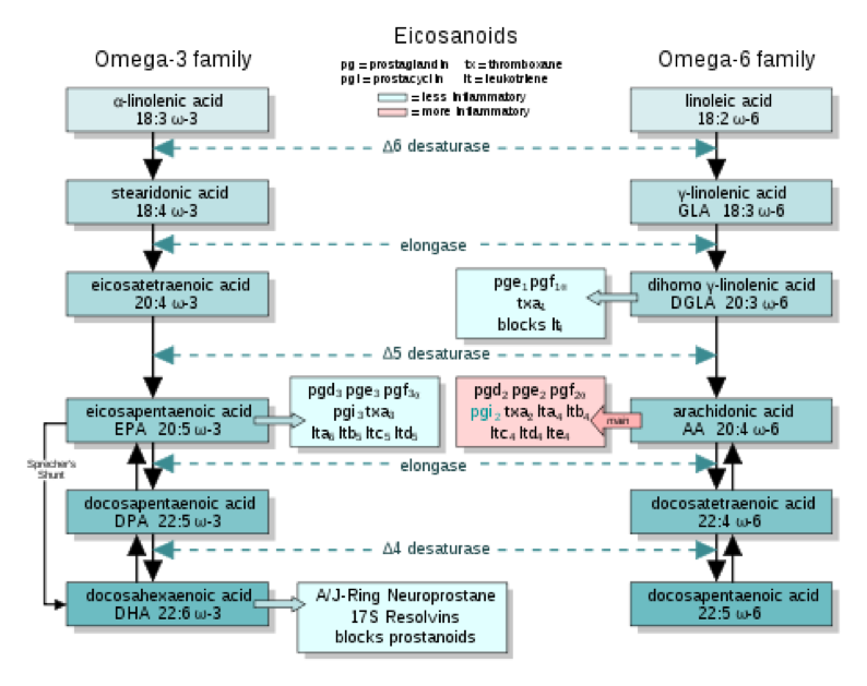 Chart with Omega-3 Fatty Acids ALA DHA EPA