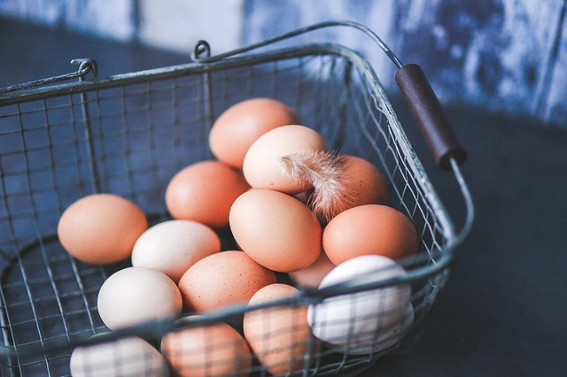 picture of free range cage free organic pastured eggs