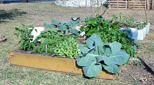 what and when to plant in a raised bed garden