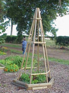 a trellis for vining plants