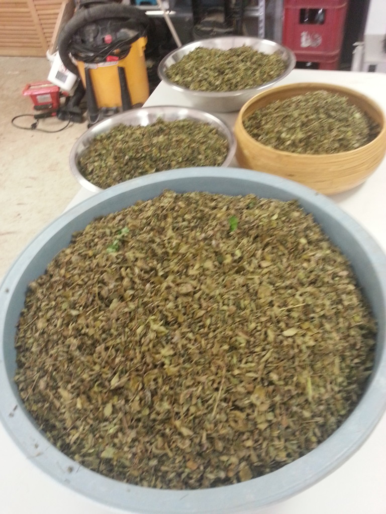 Picture of bowls filled with dried moringa leaves. prepping to make moringa powder