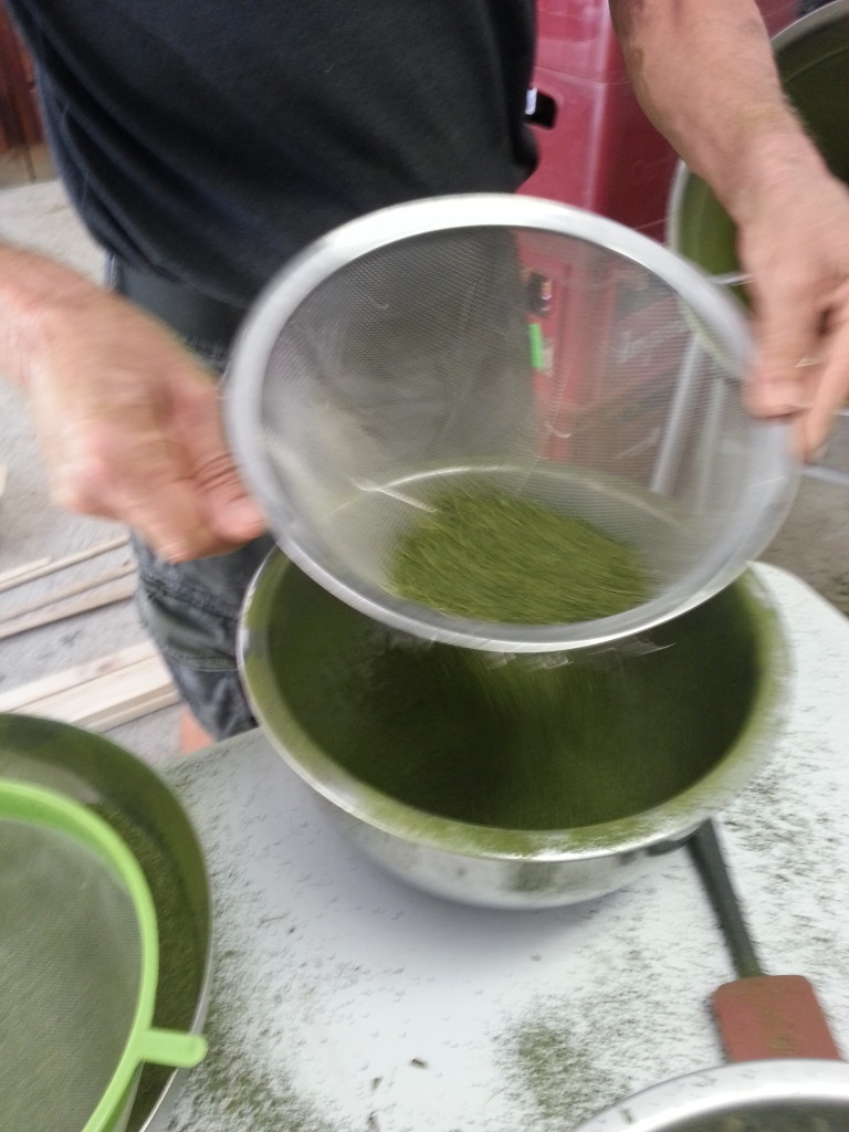 Sifting moringa powder in a metal colander